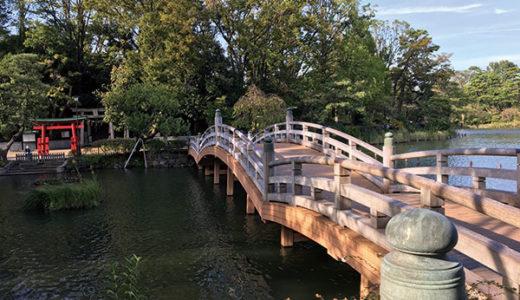 遭遇率数%の激レア渡り鳥に会えるかも!野鳥と偉人の池「洗足池」で1年の締めくくり