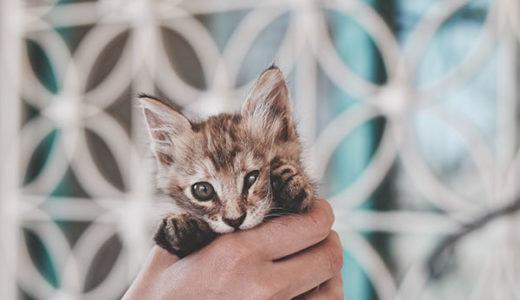 コロナでSNS疲れ……それなら話題の#猫拳でクスッと笑おう